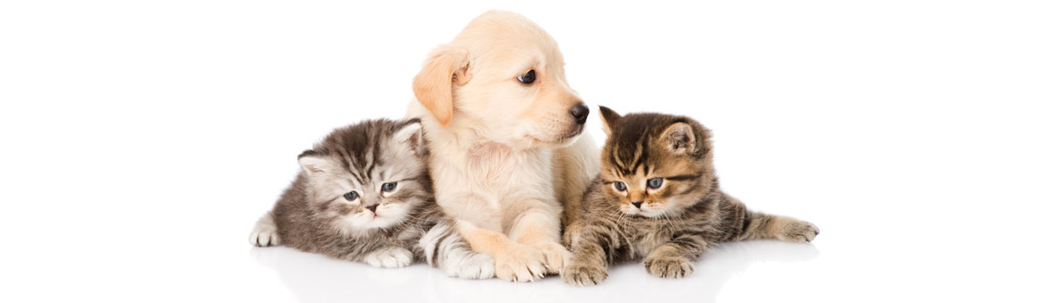 Puppy and Two Kittens Playing