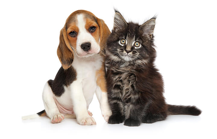 Cat and Dog - Pet Health Care