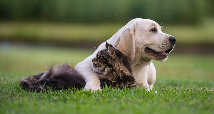 Dog and cat laying on a grass field