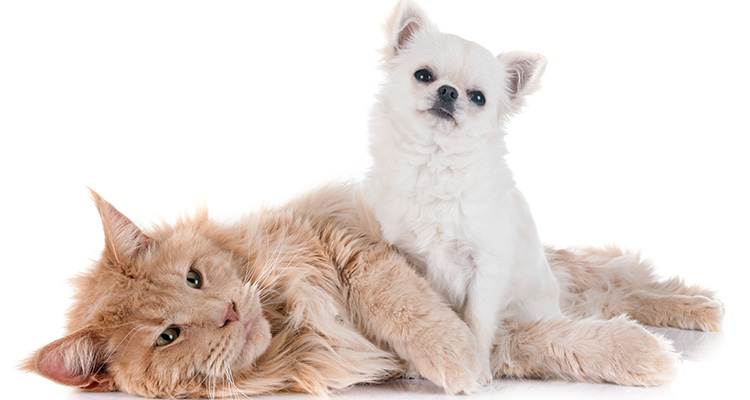 Additional reasons for spaying/neutering in Riverview FL area