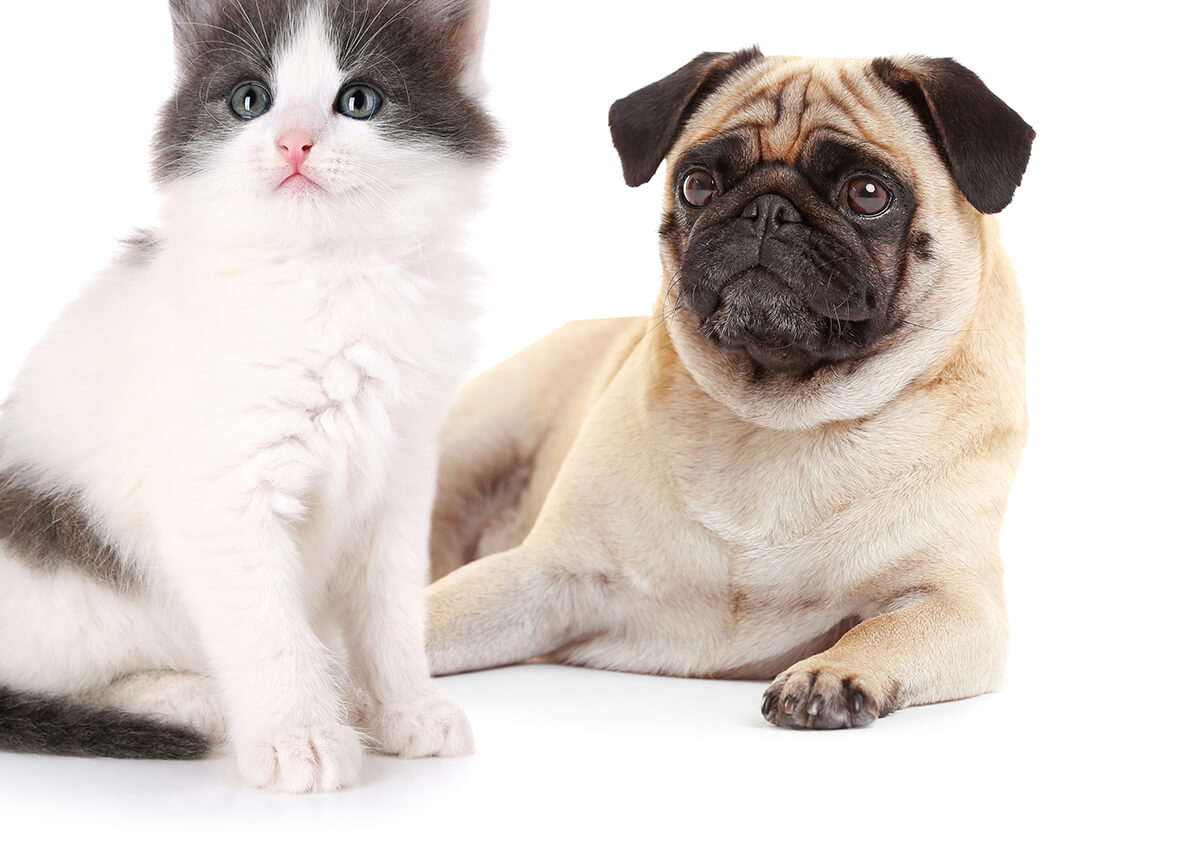 3 Reasons to Schedule an Annual Check Up for Your Pet in Riverview FL Area