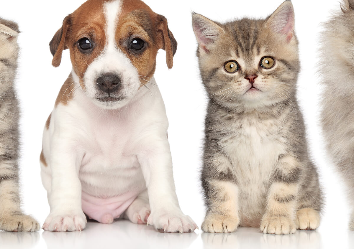 Puppy Kitty Care Service at Pavilion Crossing Animal Hospital & Grooming in Riverview Area